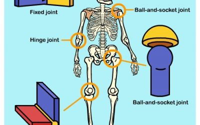 Learn about your Joints