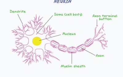 Learn about the Human Nervous System
