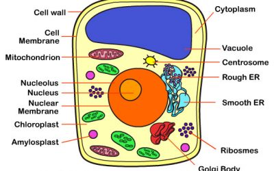 Learn about the Plant Cell