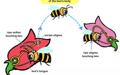 Learn about Pollination