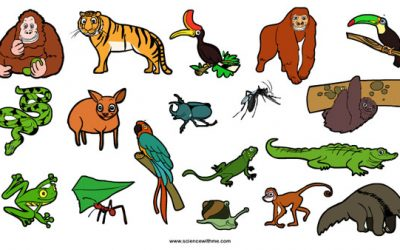 Learn about Rainforest Animals